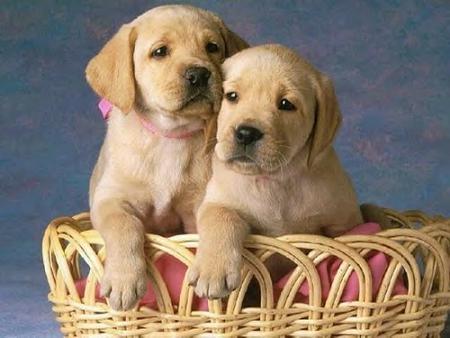 IMAGENES DE PERROS - Página 15 20080412111306-perros-portada