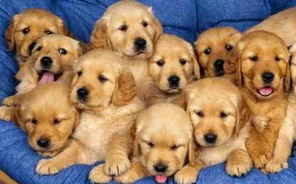 Regala algo a la forera de arriba 20081105194831-perros-cachorros