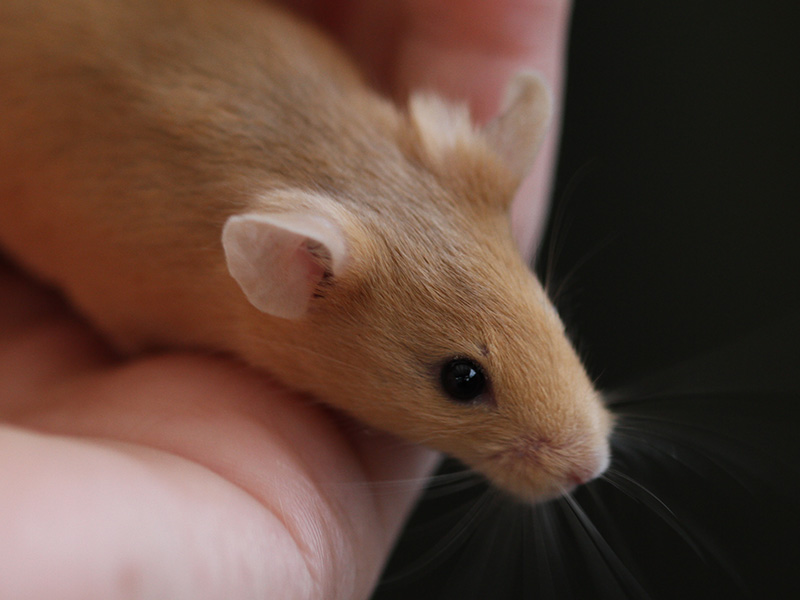 What varieties are my mice? IMG_2112a