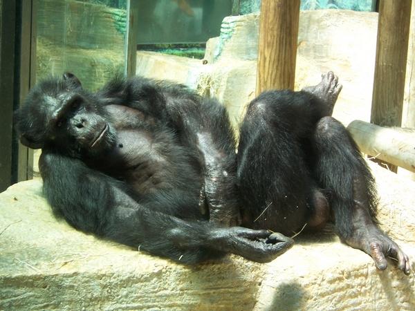 Zoo de Beauval 286805
