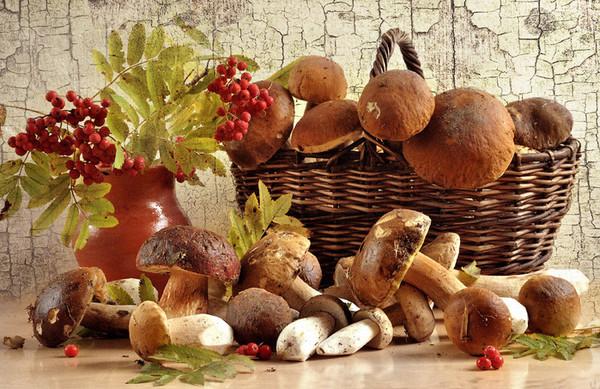 Les champignons  40b4fc06