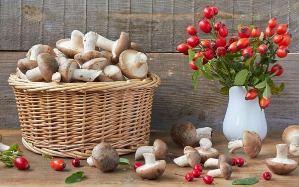 Les champignons  7dce5ec0