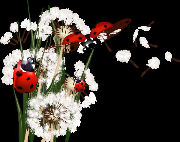 Le monde merveilleux des insectes A2935f74