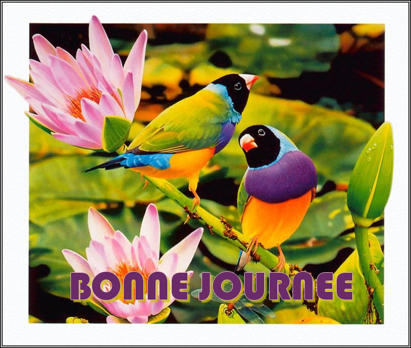 Anniversaire Blondinette 59 01da2b26