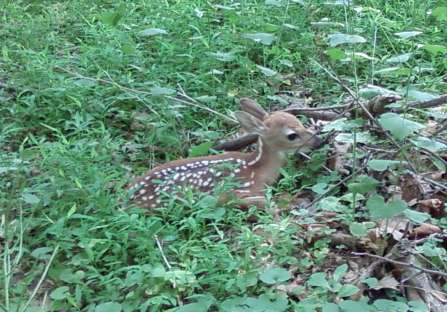 More cute fawn pics Fawn_Clarks_Crossing_Park.jpg_t