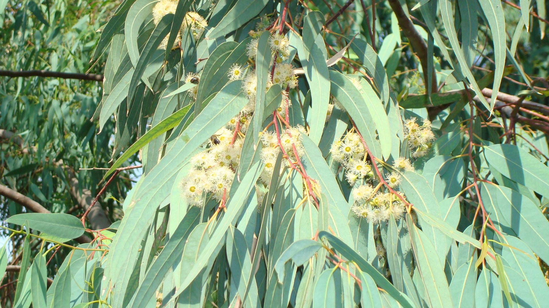 une fleur - blucat-  8 août trouvée par martine Fc59f924