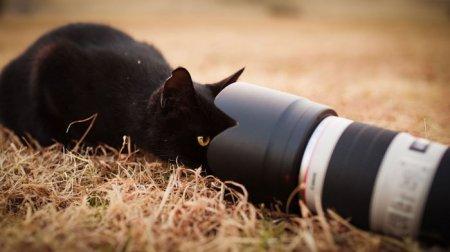 Коты и кошки через объектив Сейдзи Мамия (19 фото)
