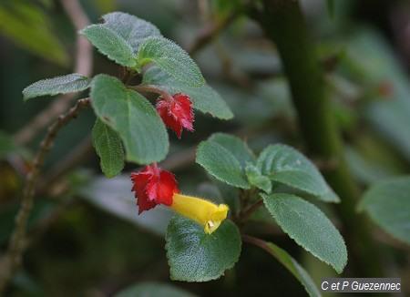 une fleur à découvrir par blucat (21juillet)trouvée par ajonc - Page 3 Img_6206m
