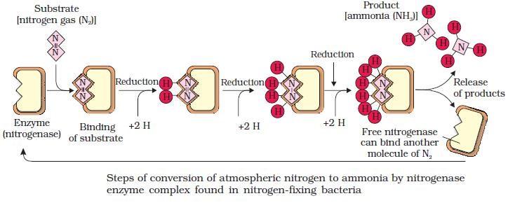 Nitrogenase 72s0526