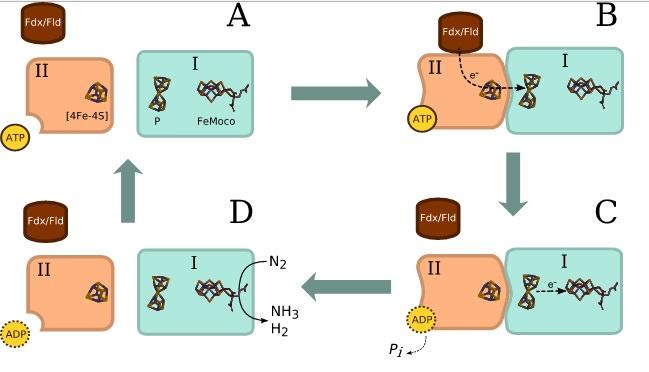 Nitrogenase V6gkJfS