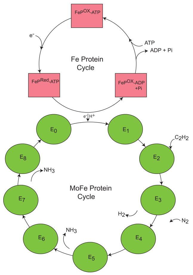 Nitrogenase HBA67lW