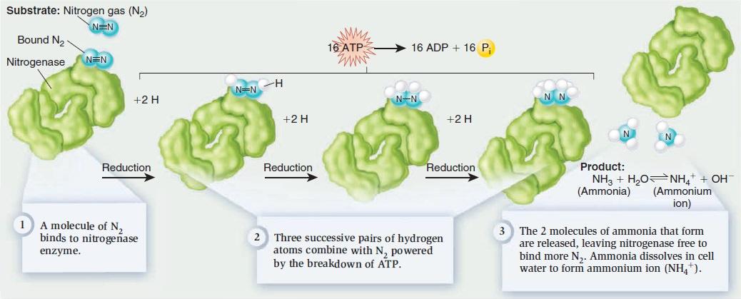 Nitrogenase JYm5iTx