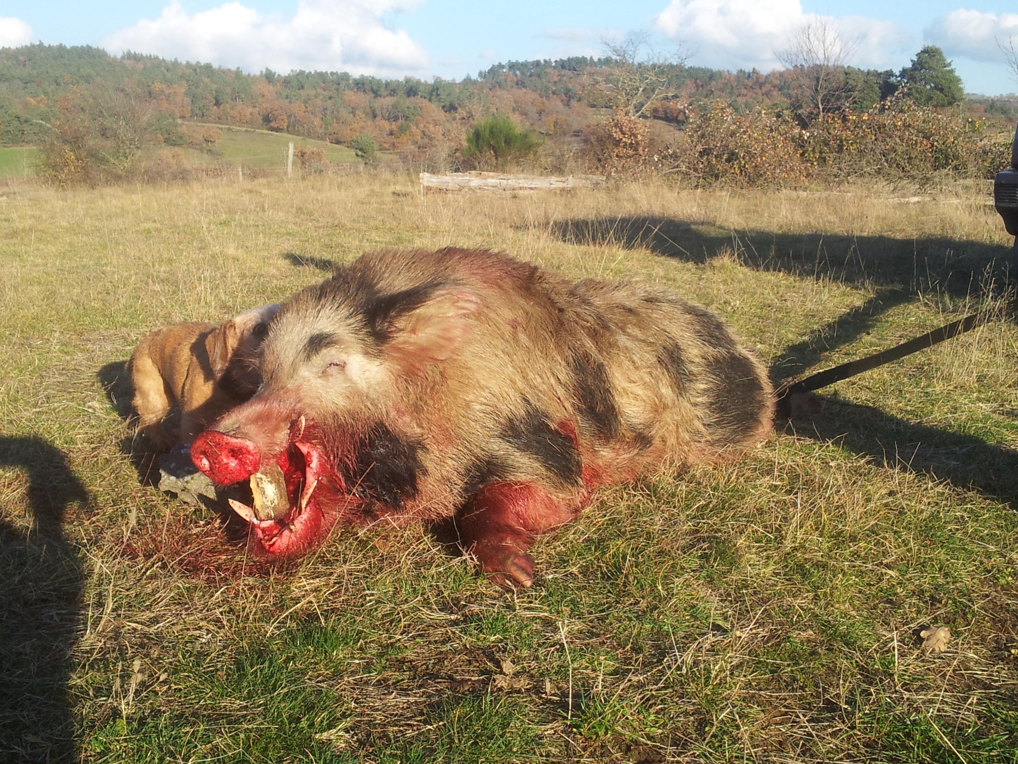 Saison de chasse au Grand Gibier 2012/2013 - Page 5 1353402857-android-image-11-20-2012