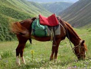 Transports des terres désolées 1359105414-2006-cheval-selle-120-m