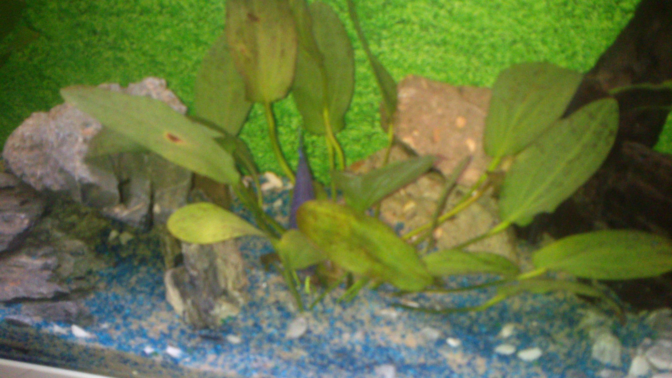 Aquarium 120L - Cichlidés  1432540909-dsc-0056