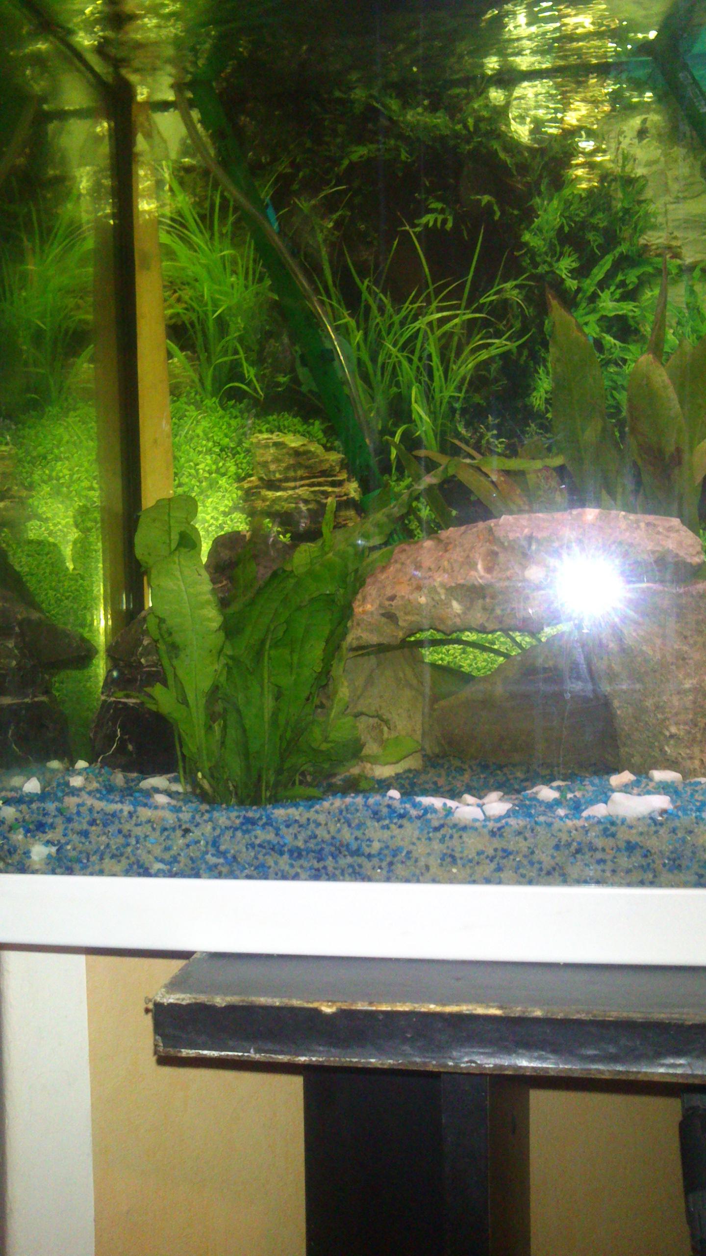 Aquarium 120L - Cichlidés  1432540918-dsc-0065
