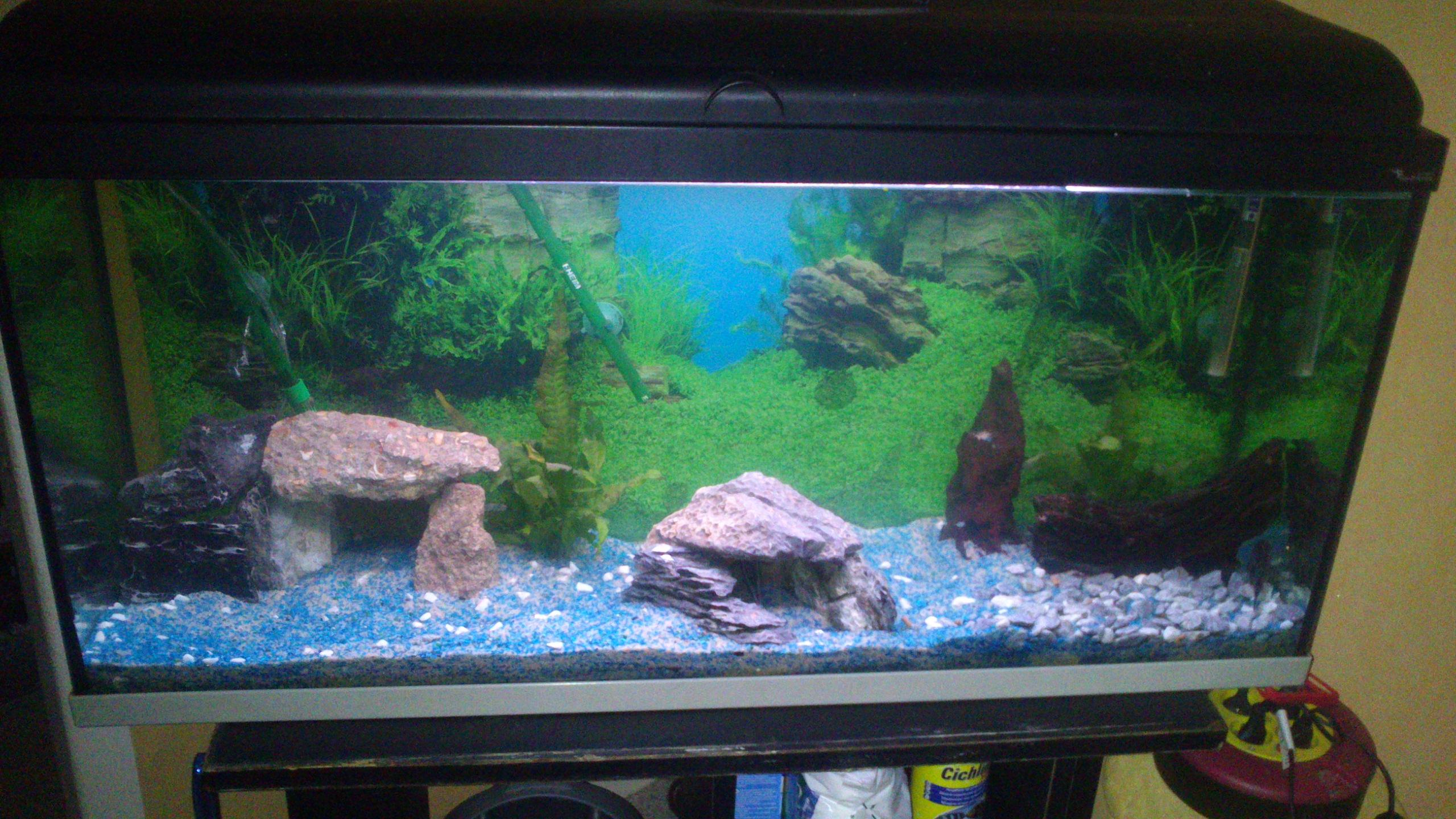 Aquarium 120L - Cichlidés  1432540937-dsc-0049