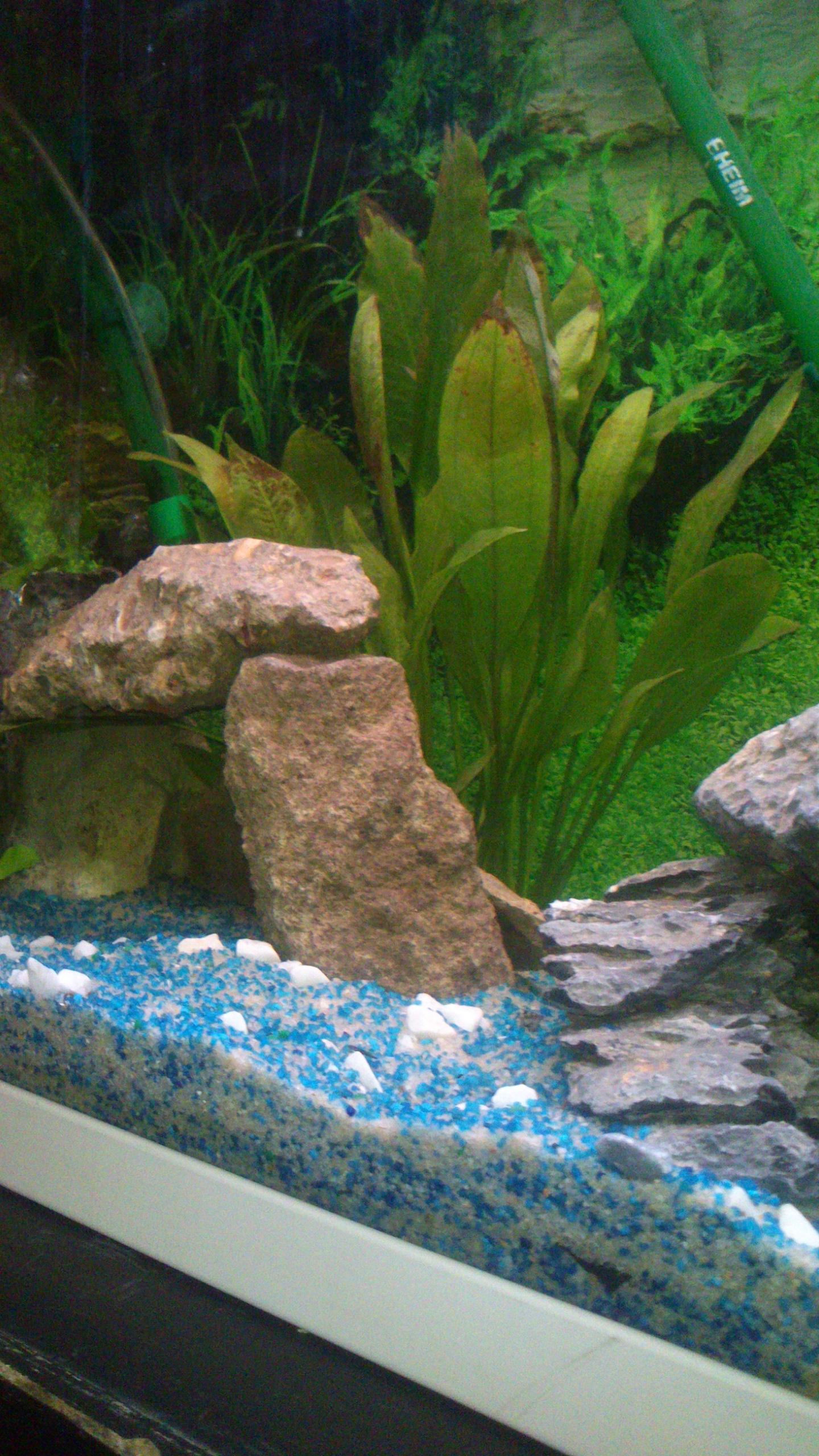 Aquarium 120L - Cichlidés  1432540941-dsc-0067
