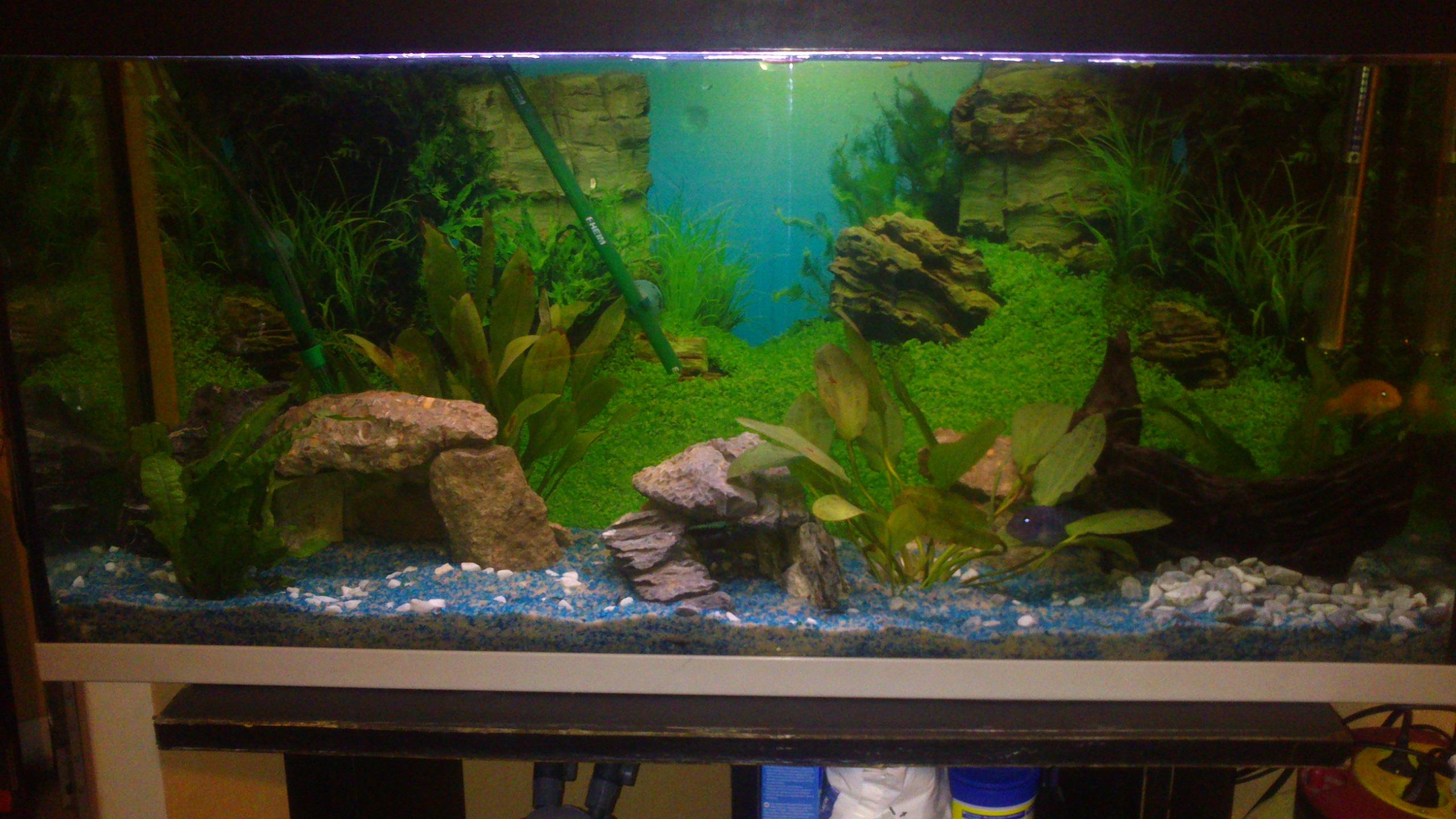 Aquarium 120L - Cichlidés  1432540969-dsc-0052