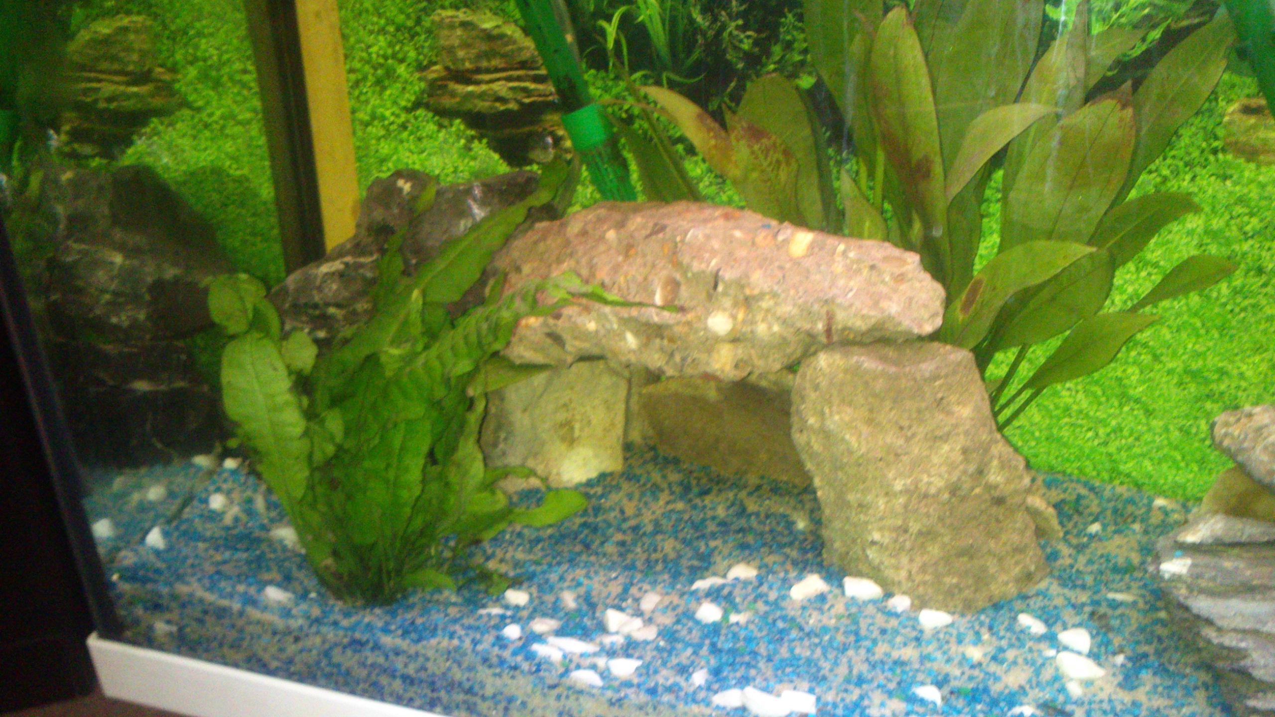 Aquarium 120L - Cichlidés  1432540982-dsc-0058