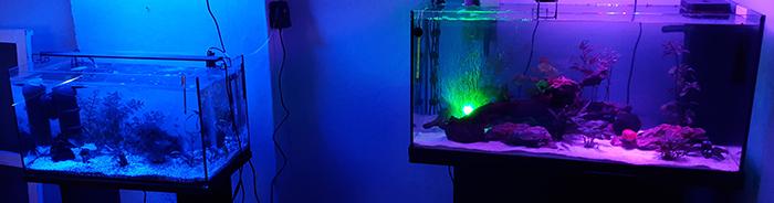 Gros pic nitrite 1433880257-signature-aquario