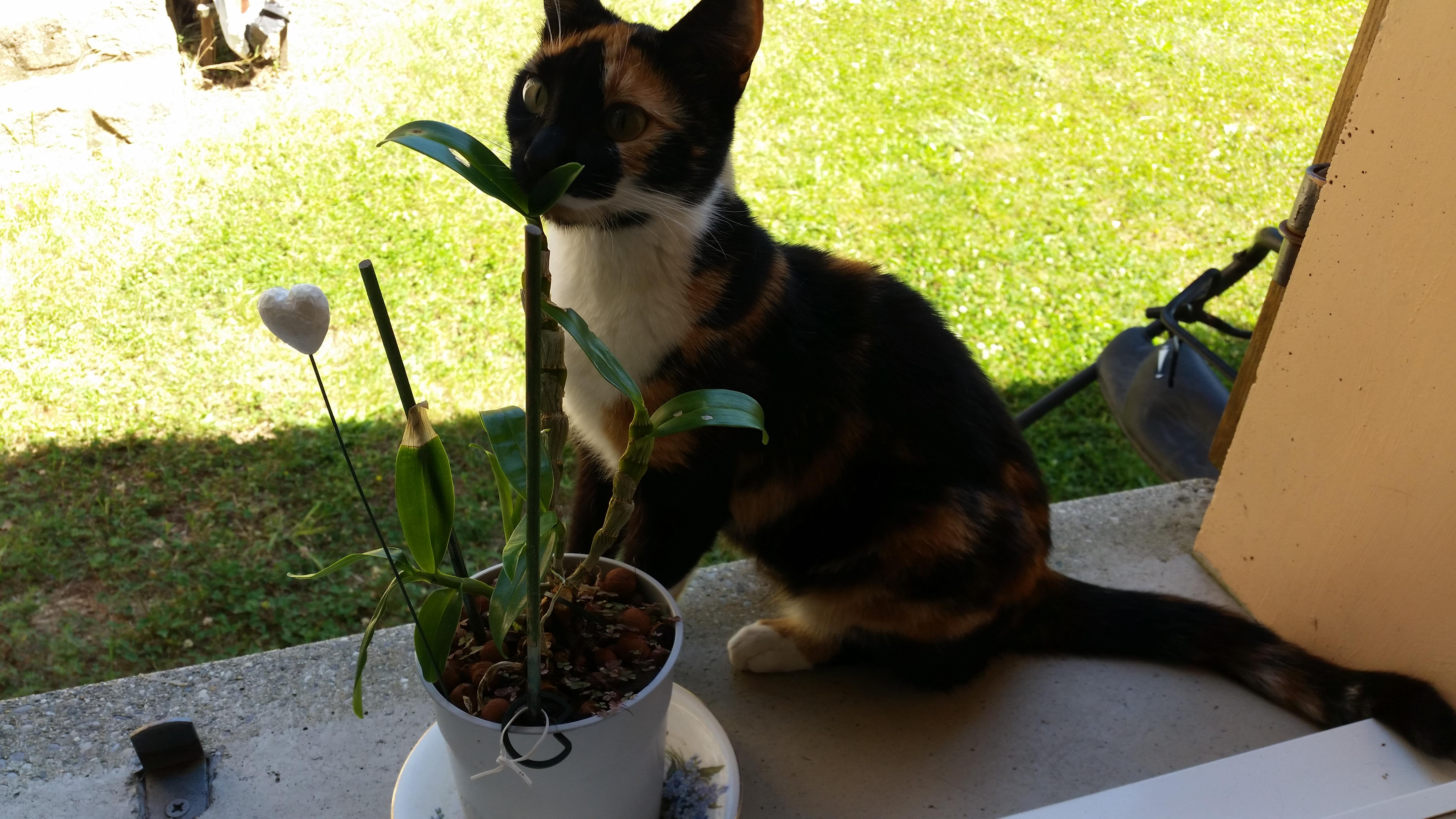 La chatte (à la voisine ?) de W.White 1475574970-4
