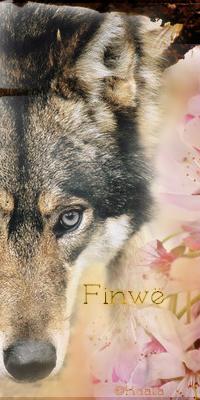 Atelier de Kaala ~ - Page 7 1481558612-avatar-finwe