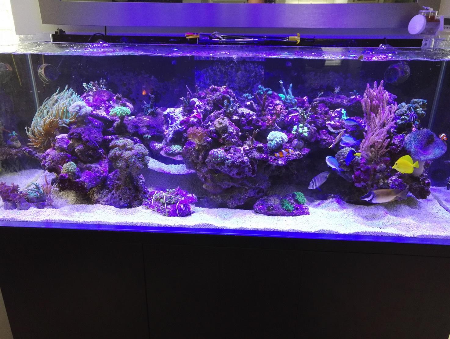 2nd Bac récifal de Max : 720 de Aquarium Systems - Page 6 1510504014-img-20171112-115152