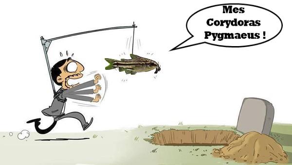 Le 35l spé Cory pygmaeus  ! - Page 4 1517505087-sans-titre-1