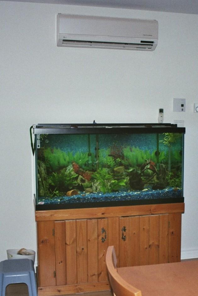 Aquarium à Discus qui pete d'un coup 1522584224-sans-titre-1