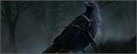 Liste des équipements disponibles 1534888313-raven