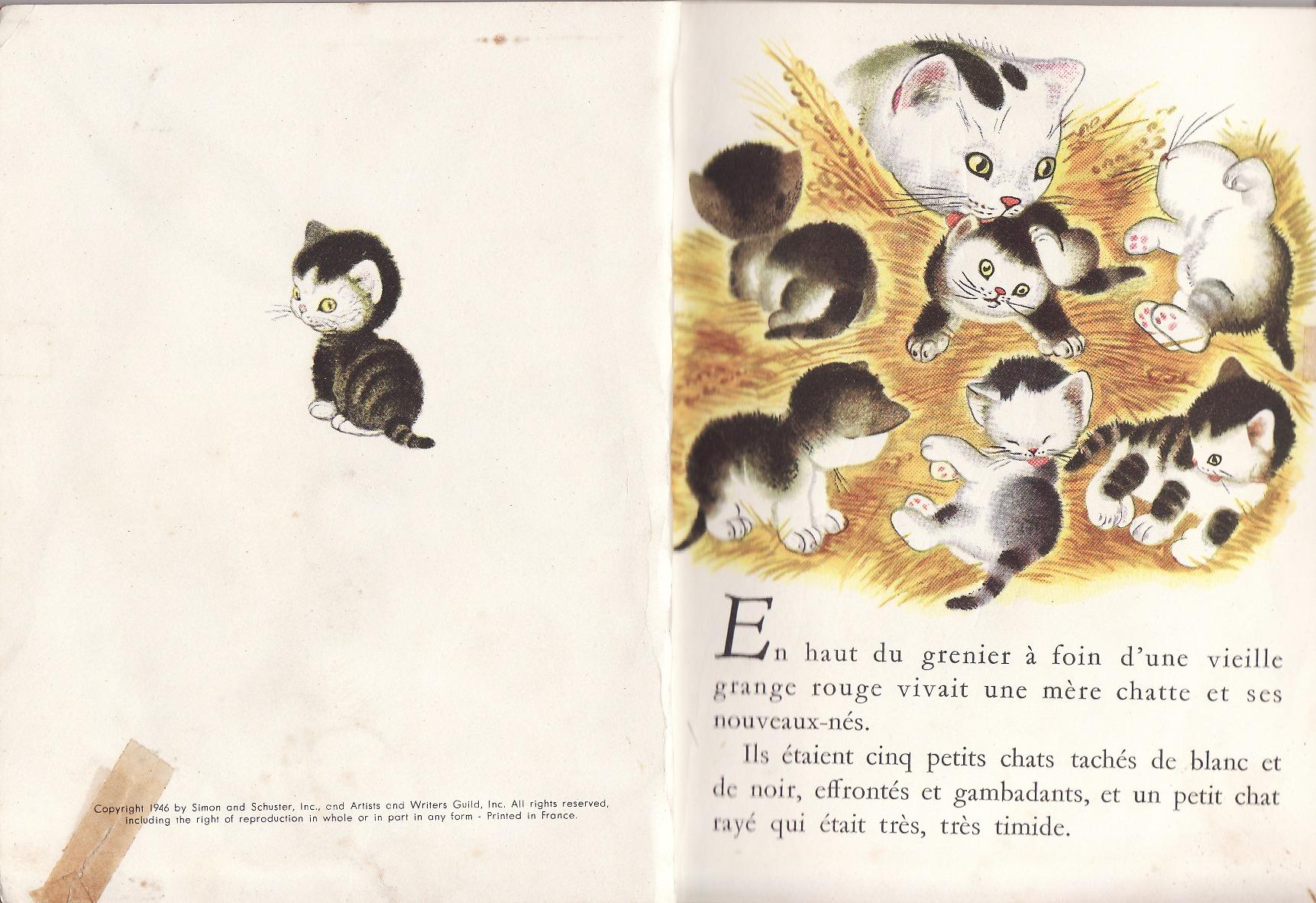 Un Petit Livre D'Or - Page 4 1546436475-petit-chat-timide-p-2-3