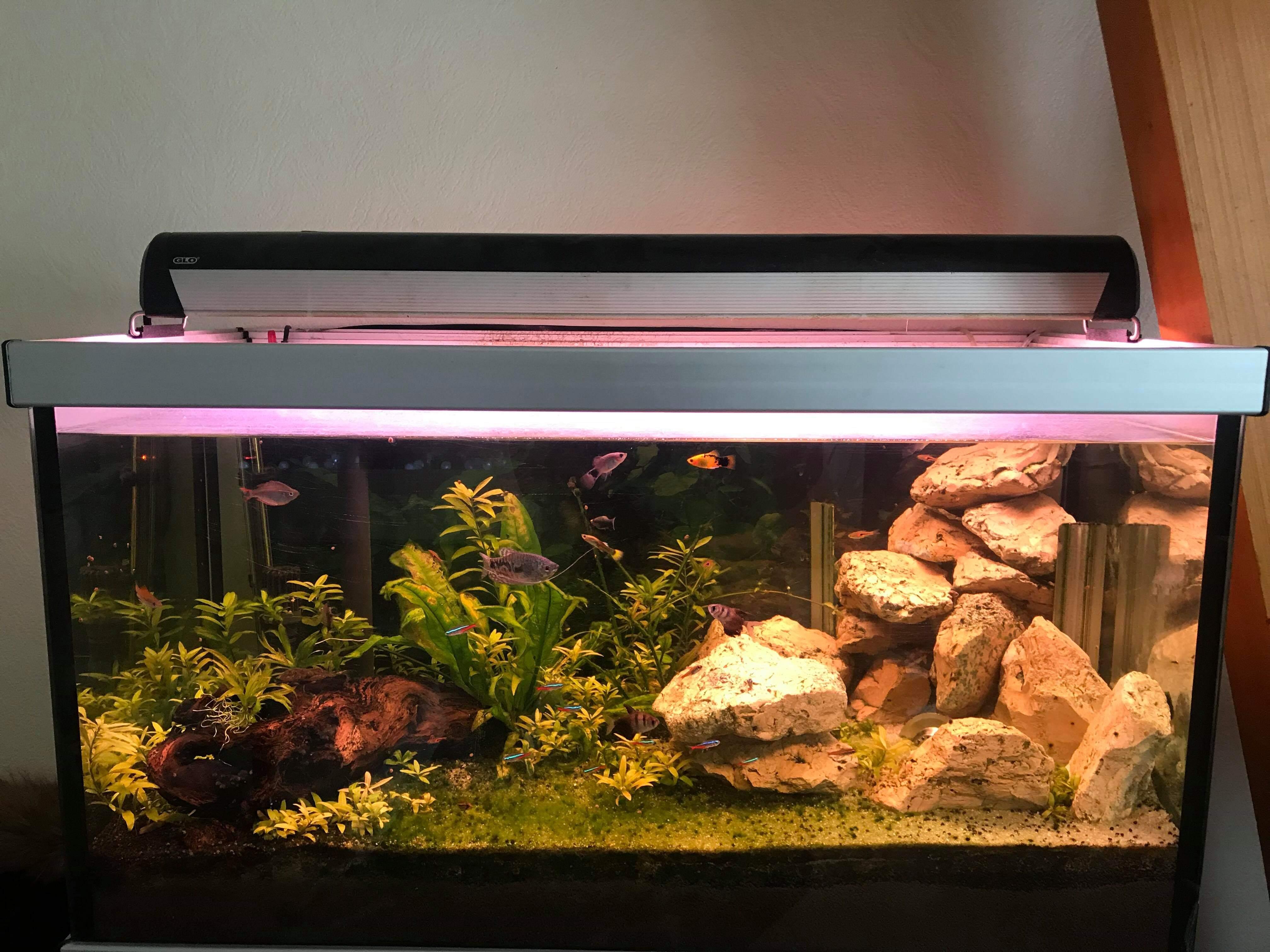 Couvercle d'aquarium démontable ?  1548334200-received-235753614030445