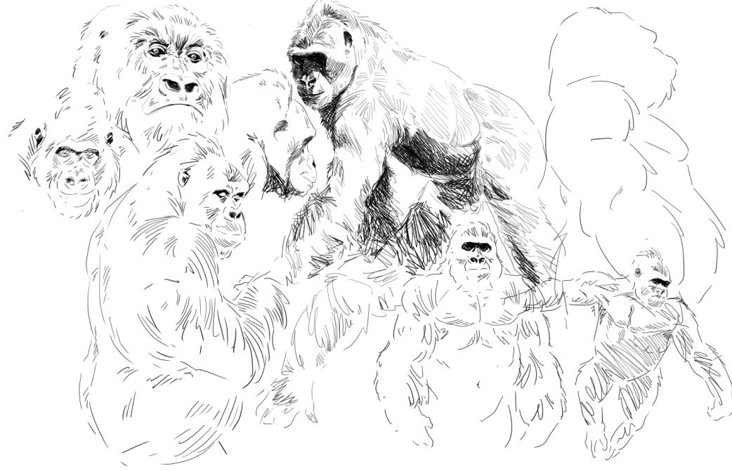 Recherches graphiques de Dagorath - Page 2 1548444695-gorillas