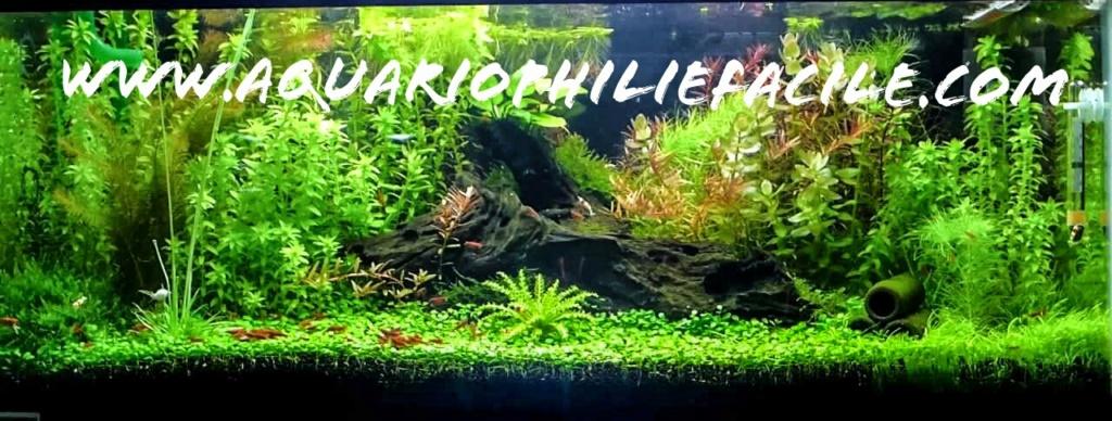 Aquariophilie Facile