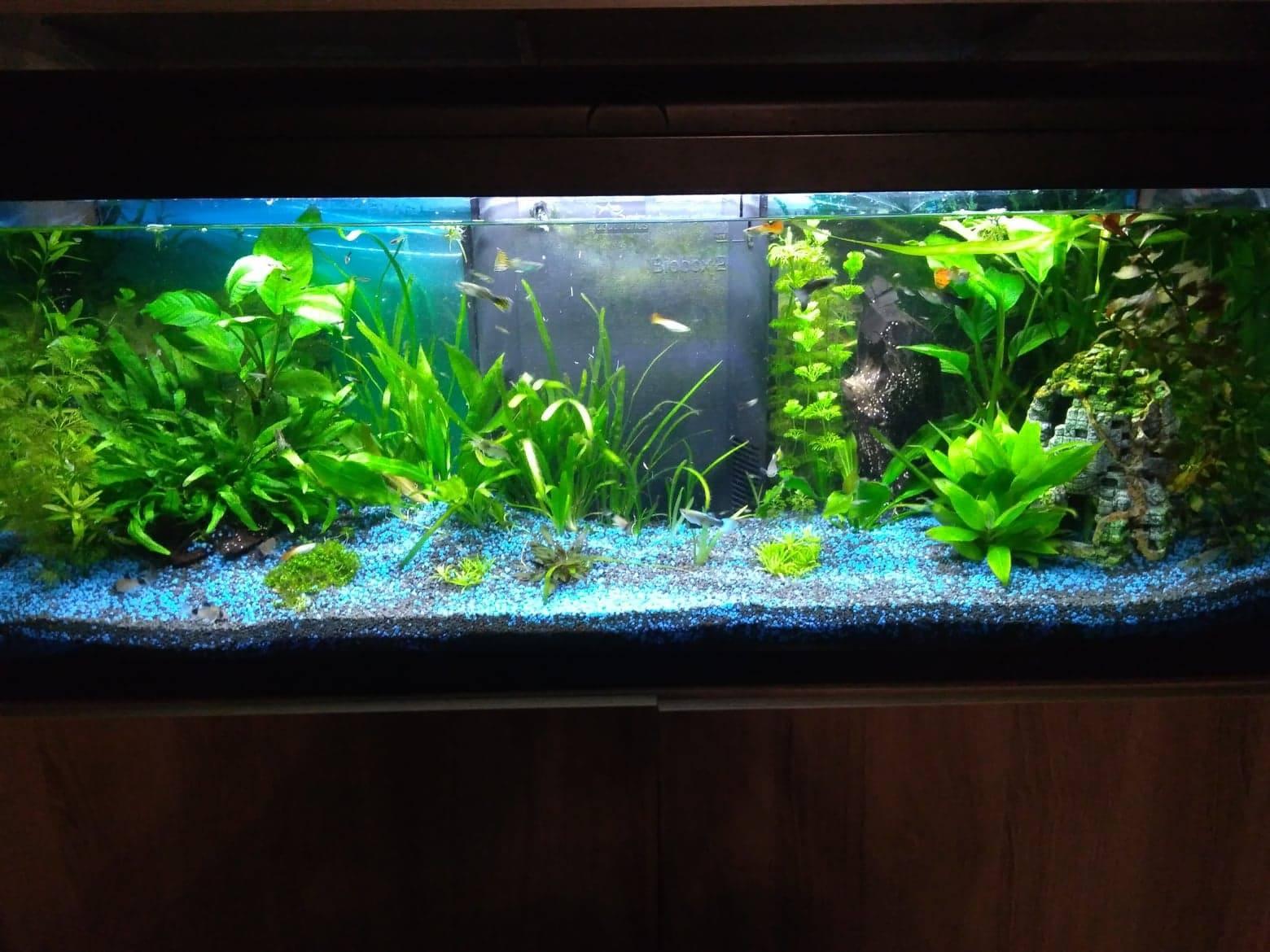 Mon petit aquarium ^^ pour ma fille. 1552856970-53767726-1249215741924065-2325988119523885056-n
