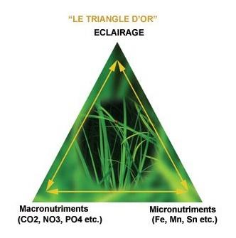 [ARTICLE] Le triange d'or d'une bonne croissance des plantes  1564505535-triangle-d-or