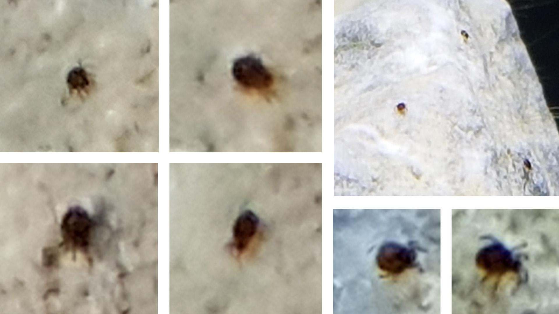 Identification minuscules bêtes noires 1570974085-sans-titre-1