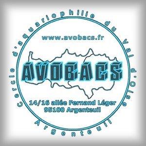 95 - Argenteuil - Bourse d'AVOBACS 1573405120-avobacs