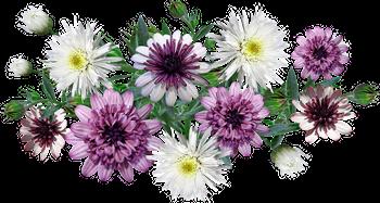 [RP] Mariage sous les auspices de Flarmya 1574007671-flowers-4356690-960-720
