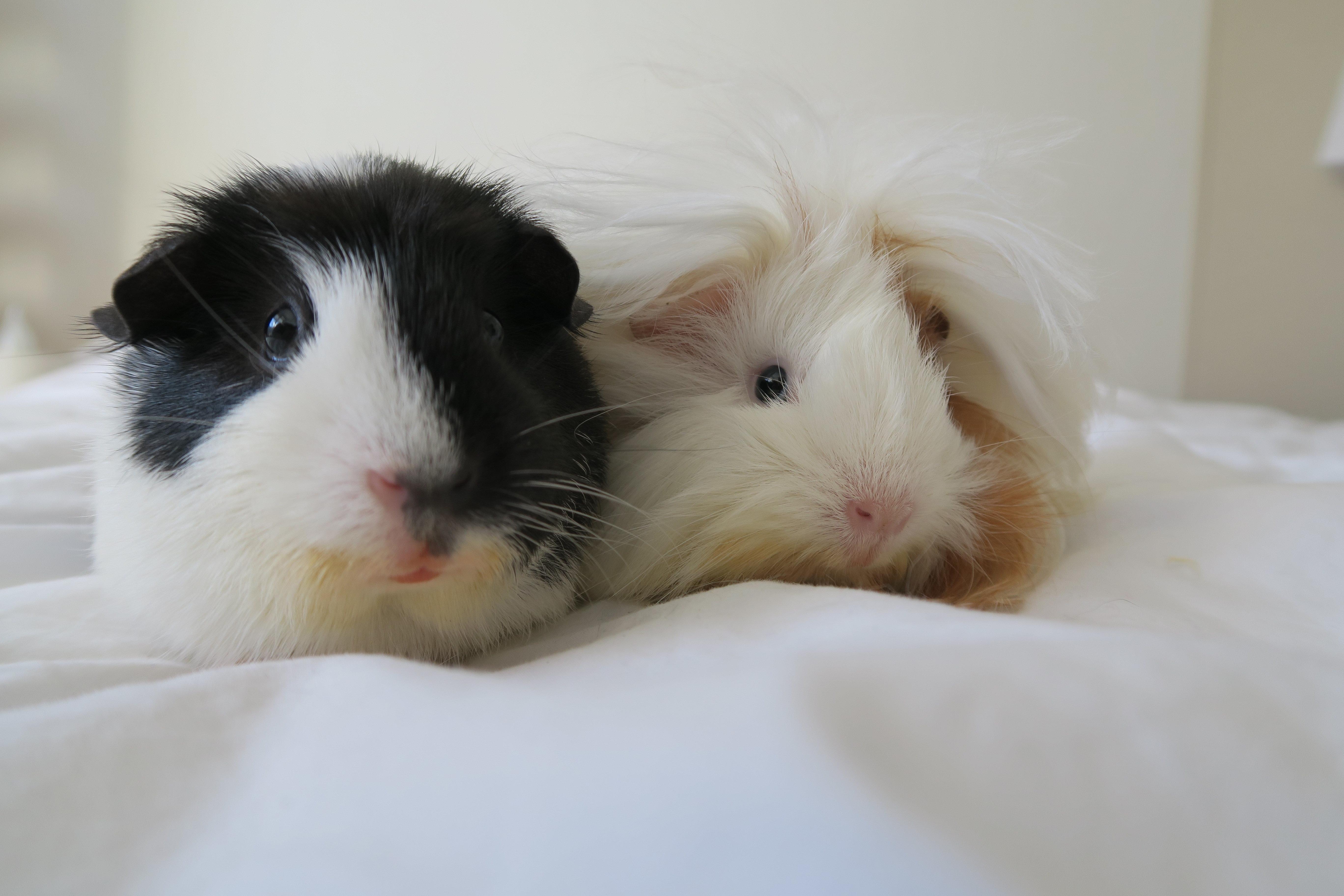 Lola & Bella 1574071004-img-2580