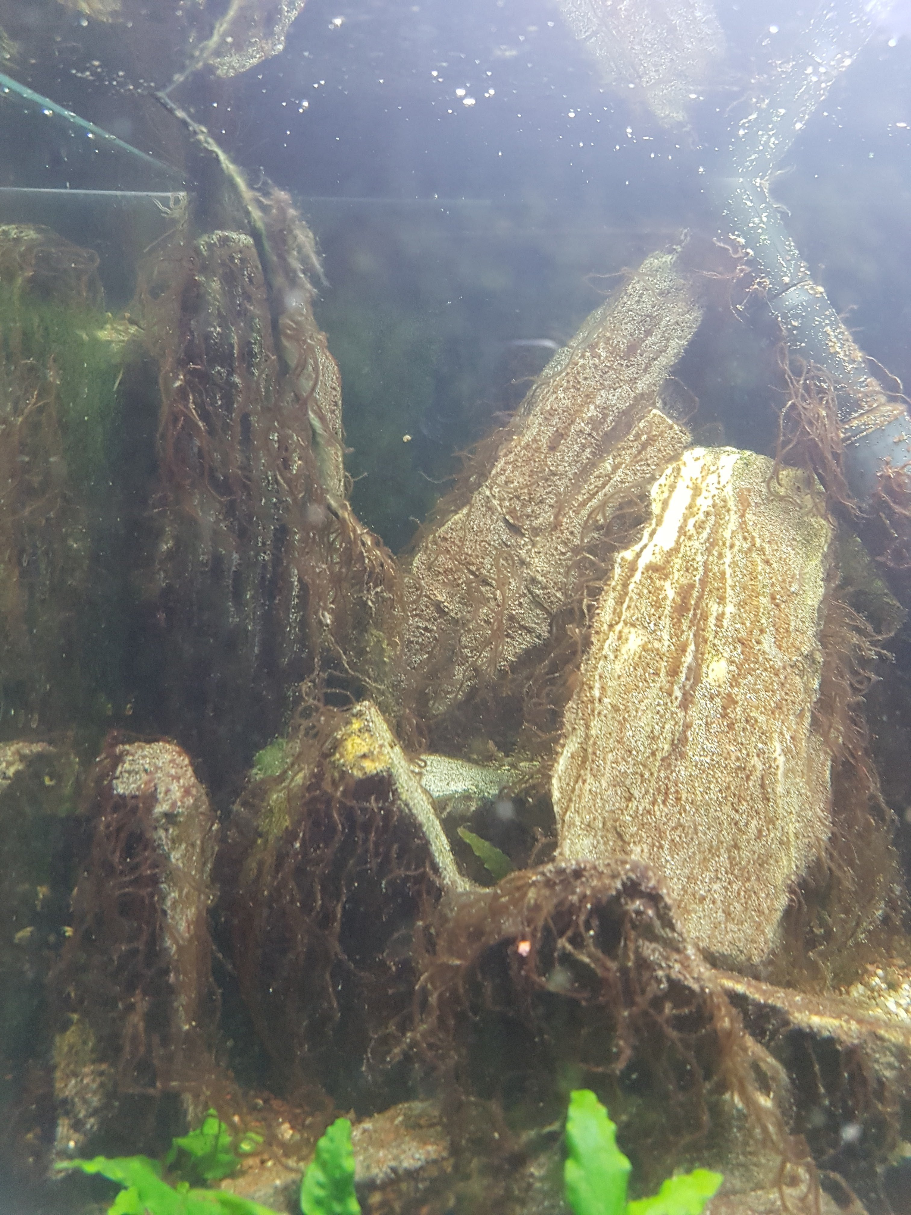 Désinfection aquarium 1610727275-2021-01-13-1