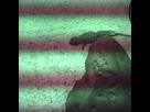 Pogona (nouvellement arrivé, ne bouge pas du point chaud) 1355028171-pogo