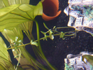 certaines plantes pourrissent... 1357635883-p1000005