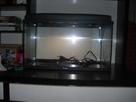 Aquarium 54L (Photos) 1361136861-cimg1220
