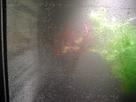 Aquarium 54L (Photos) 1361298528-cimg1225