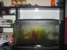 Aquarium 54L (Photos) 1361298533-cimg1222