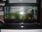 Aquarium 54L (Photos) 1361381195-cimg1227