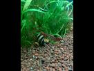 Nano 20L crevettes red cherry & betta 1389129818-img-20140105-150349