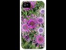 Comment avoir des fleurs d'osteospermum avec les pétales enroulées? 1398112871-osteospermum-nasinga-purple-aksullo-dr-keith-wheeler